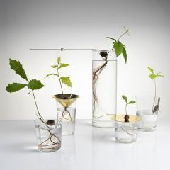 Floating Forest Series by Michael Anastassiades